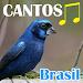 Canto Dos Pássaros Brasil