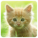 Download Cats Memory Game Free 1.0.6 APK