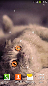 screenshot of Cute Cats Live Wallpaper version 3.6