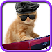 Download Funny cats Dancing and playing 1.1.2 APK