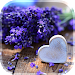 Download Love Flowers Live Wallpaper 6.1 APK