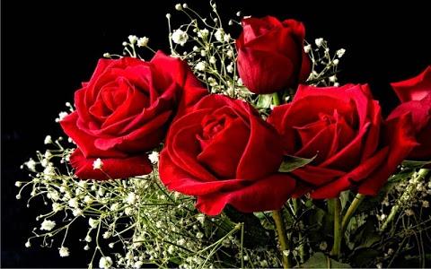 Download Red Roses Love live wallpaper 1.6 APK