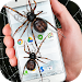 Download Spider in phone funny joke 2.6 APK