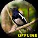 Download Suara Burung Kacer Full Isian MP3 1.1.1 APK