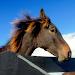 Download Wild Animals Horse HD Jigsaw 1.0 APK