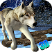 Download Wild Wolf - 3D Run 1.1 APK